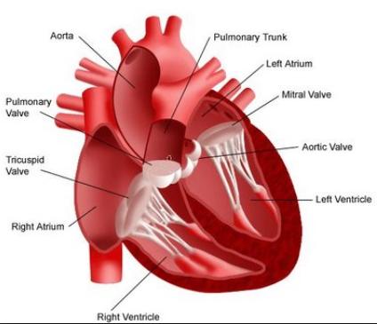 Menjaga Kesehatan Jantung Secara Alami dengan Proargi-9+